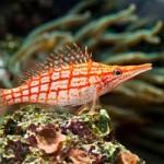 Underwater World00001