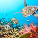 Underwater world00002