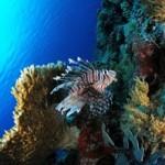 Underwater world00003