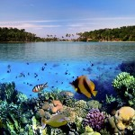 Underwater world00005
