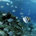 Underwater world00006