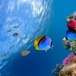 Underwater world00008