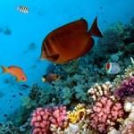 Underwater world00009