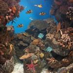 Underwater world00010