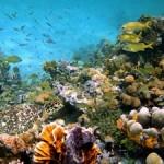 Underwater world00012