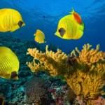 Underwater world00013