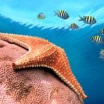 Underwater world00014