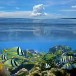 Underwater world00015