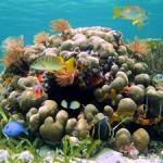 Underwater world00016