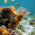 Underwater world00017