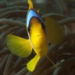 Underwater world00018