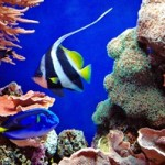 Underwater world00019
