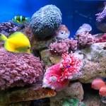 Underwater world00020