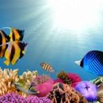 Underwater world00021