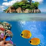 Underwater world00022