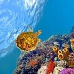 Underwater world00024