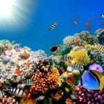 Underwater world00025