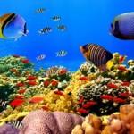 Underwater world00026
