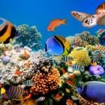 Underwater world00027